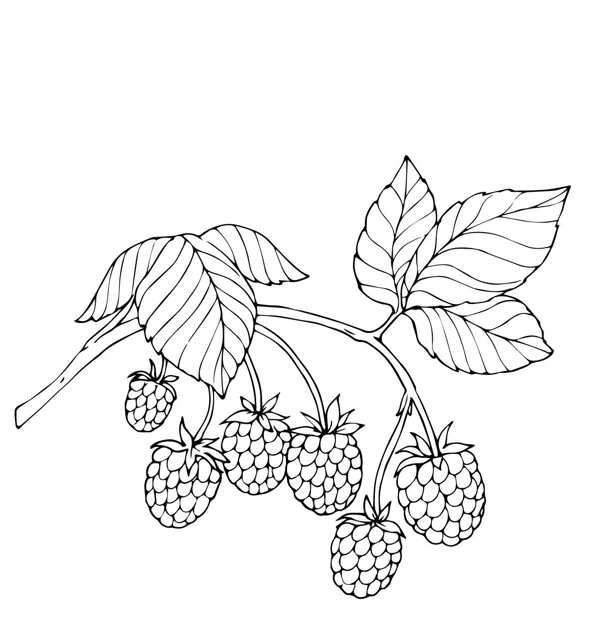 Berries coloring pages to download