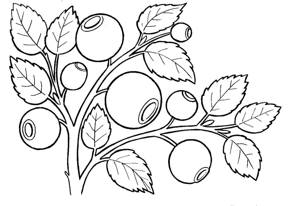 Berries Coloring Pages To Download And Print For Free