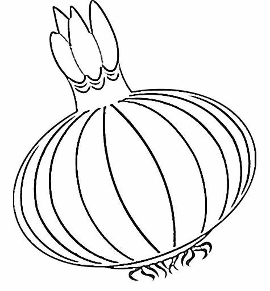 Onion coloring pages to download