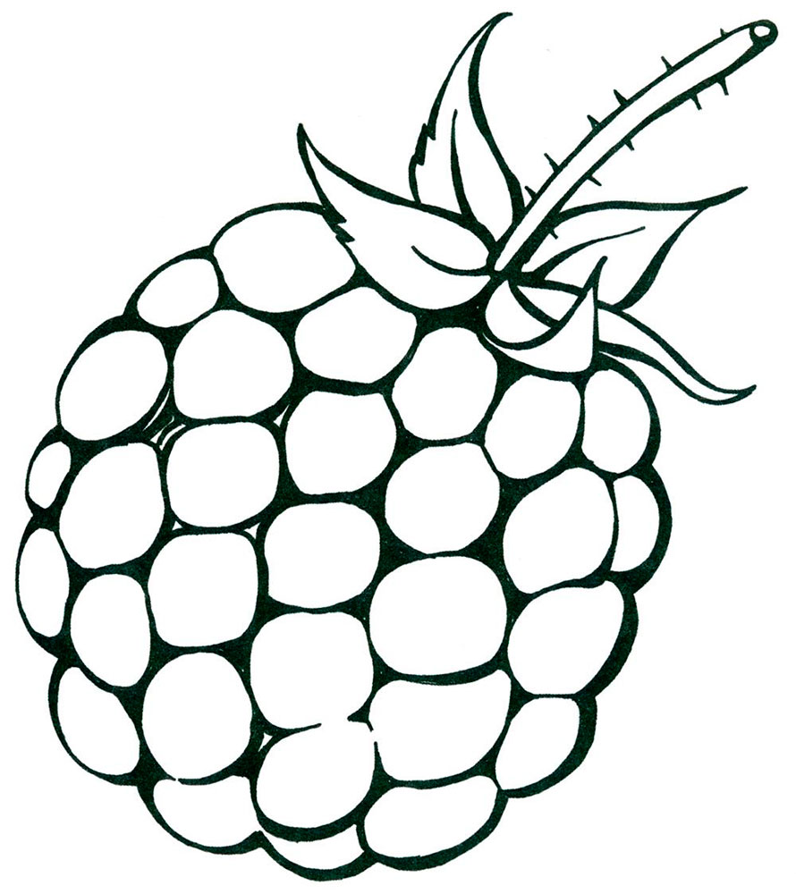 Blackberry coloring pages to download and print for free