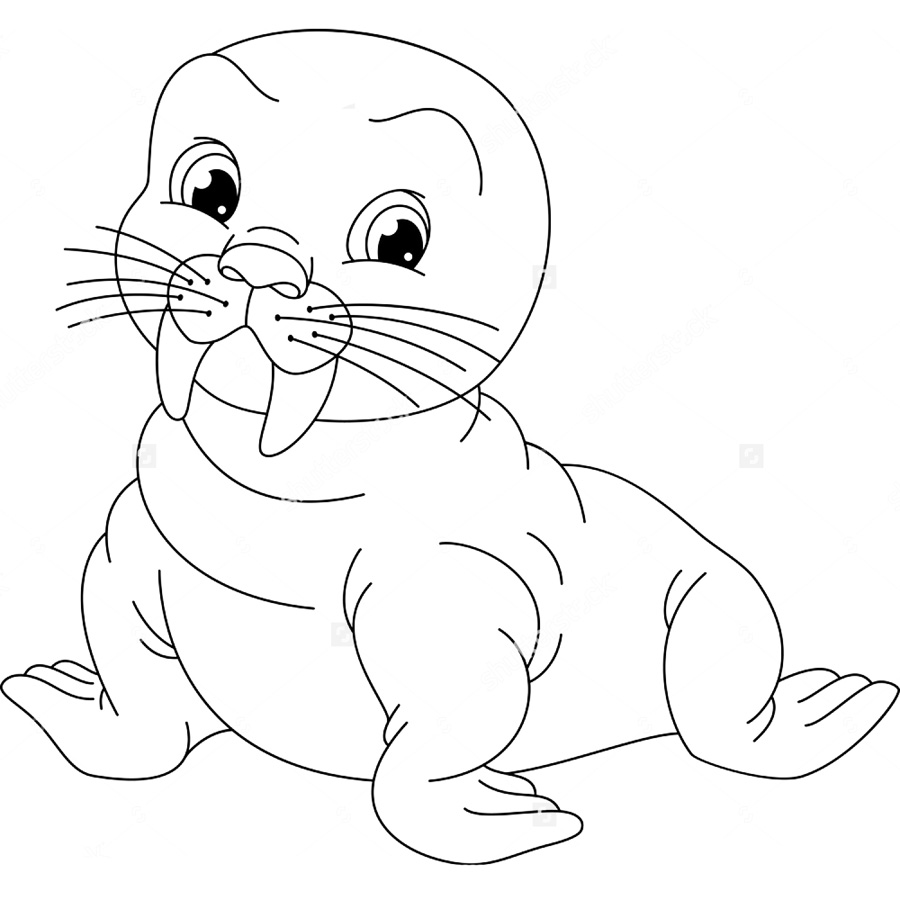 Walrus Coloring Pages to download and print for free