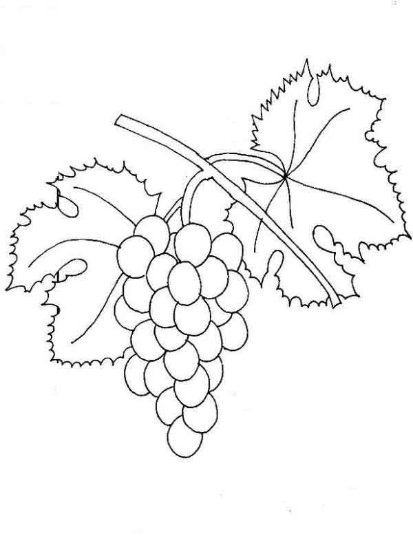 Grapes coloring pages to download