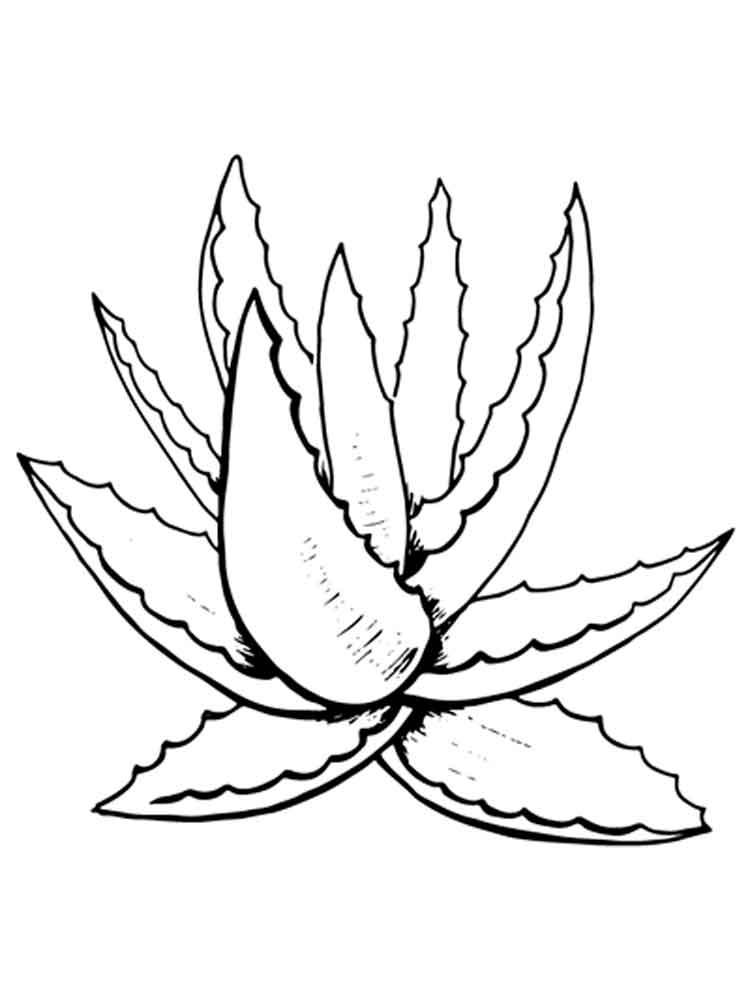 агава картинка черно белая что менее интересно