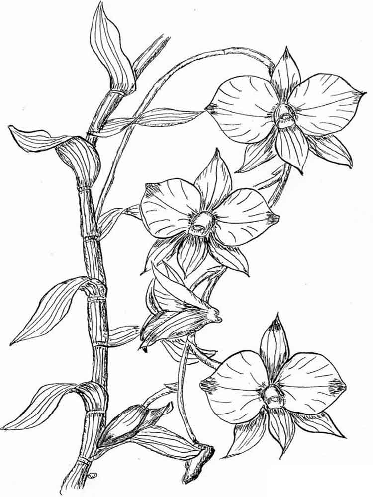 Orchid Coloring Pages To Download And Print For Free