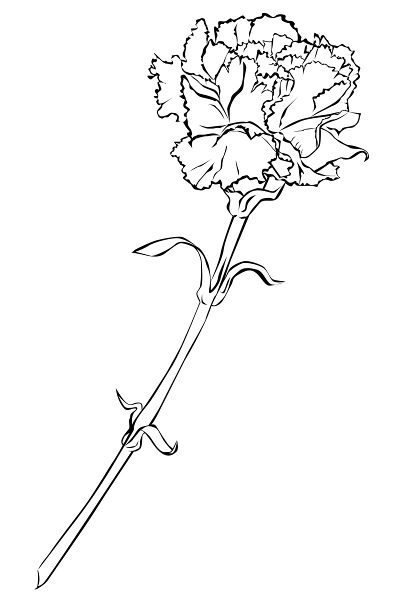 Carnation Coloring Pages To Download And Print For Free