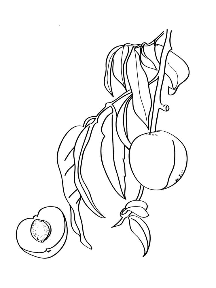 Peach coloring pages to download and print for free