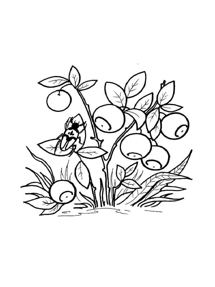 Blueberries Coloring Pages To Download And Print For Free