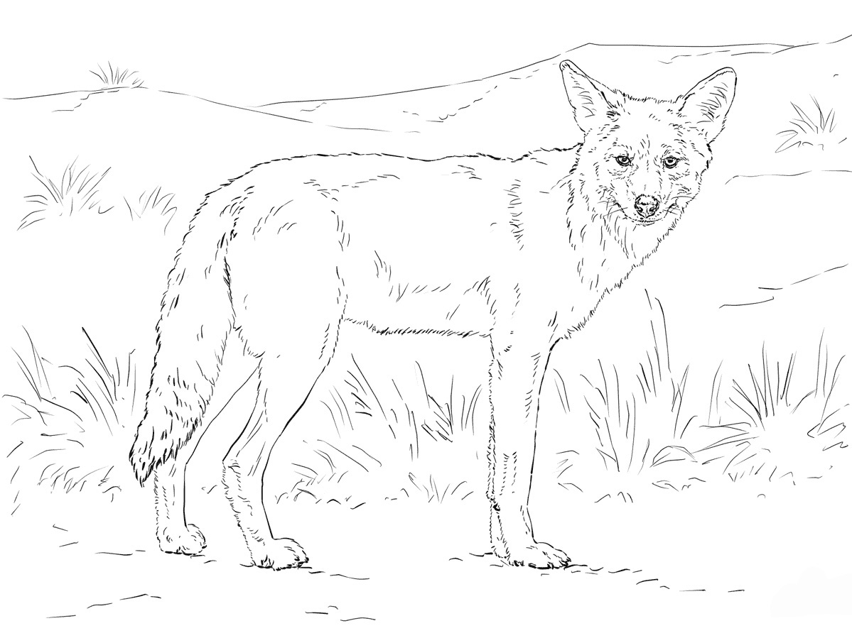 Coyote Coloring Pages To Download And Print For Free