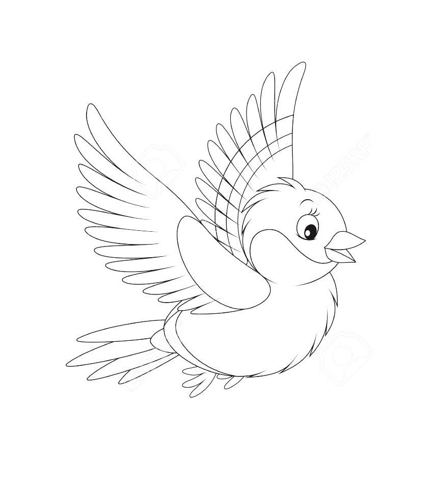 Bullfinch coloring pages to download