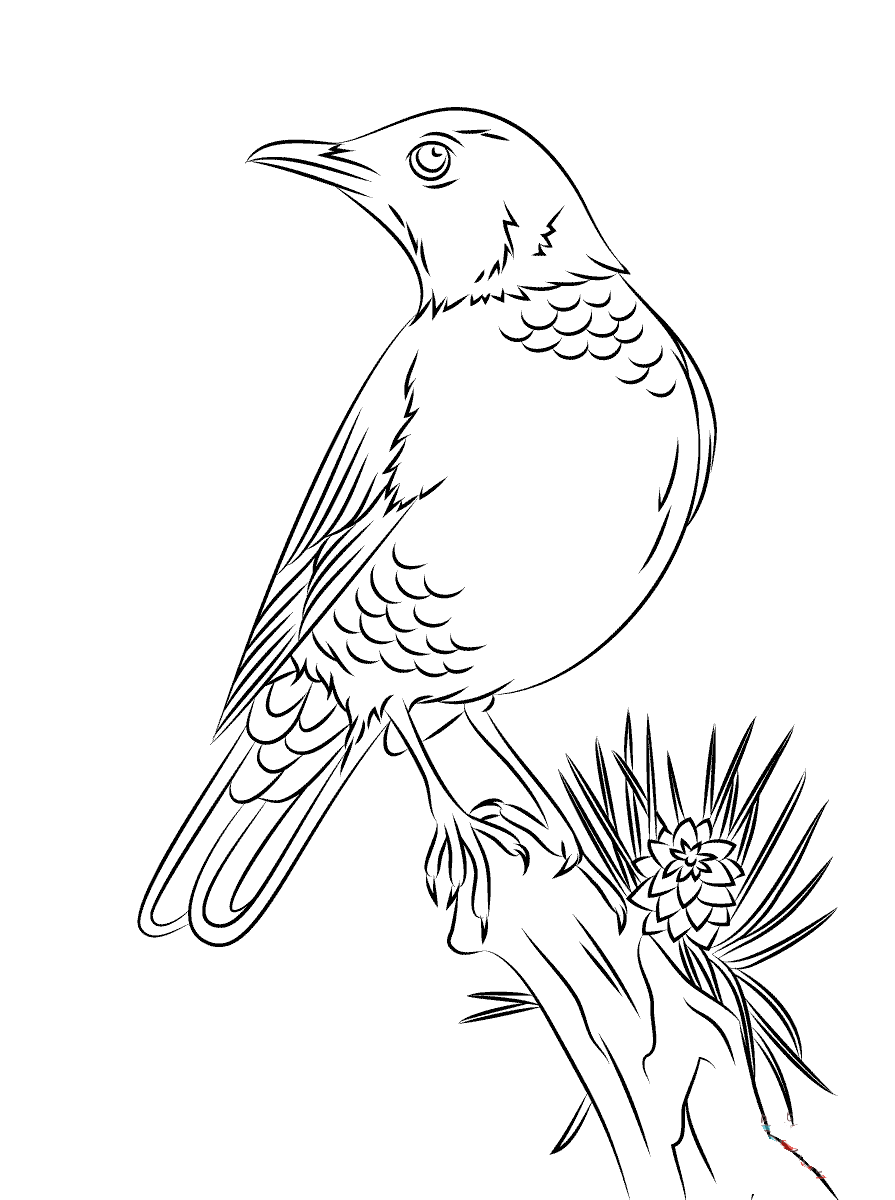Thrush Coloring Pages To Download And Print For Free