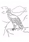 Condor coloring pages