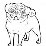 Pug Coloring Pages