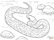 Python coloring pages