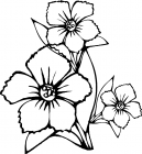 Large flowers coloring pages