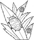 Spring bug coloring pages
