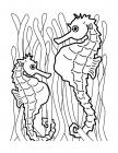 Seahorse coloring pages