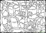 Rainforest coloring pages