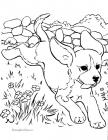 Dogs 101 coloring pages