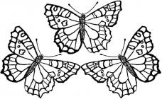 Monarch butterfly coloring pages