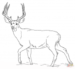 Red deer coloring pages
