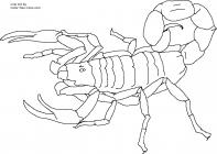 Scorpion coloring pages