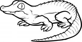 Crocodile coloring pages