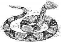 Snake coloring pages