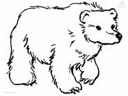 Brown bear coloring pages
