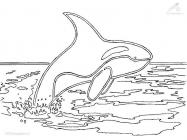Killer whale coloring pages