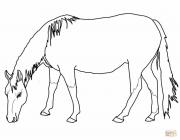 Palomino horse coloring pages