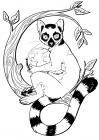 Lemur coloring pages