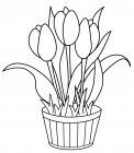 Tulip coloring pages