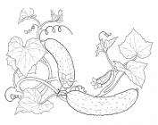 Cucumber coloring pages