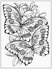 Anti stress coloring pages for girls