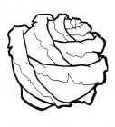 Cabbage coloring pages