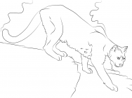 Puma coloring pages