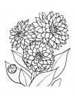 Aster coloring pages