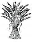 Wheat coloring pages