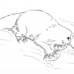 Platypus Coloring Pages