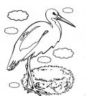 Stork coloring pages
