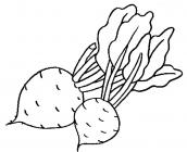 Beet coloring pages