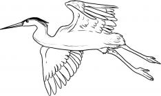 Heron coloring pages