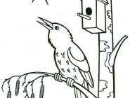 Starling coloring pages