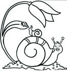 Snail coloring pages