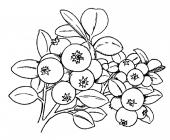 Blueberries coloring pages