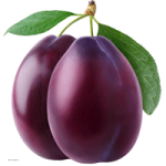 Plum coloring pages