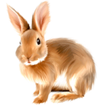 Real bunny coloring pages