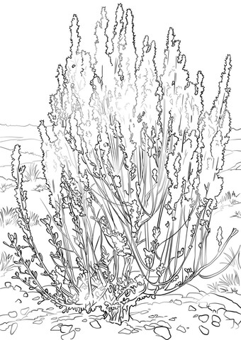 Wormwood Coloring Pages To Download And Print For Free