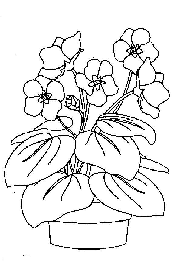Violet Coloring Pages To Download And Print For Free