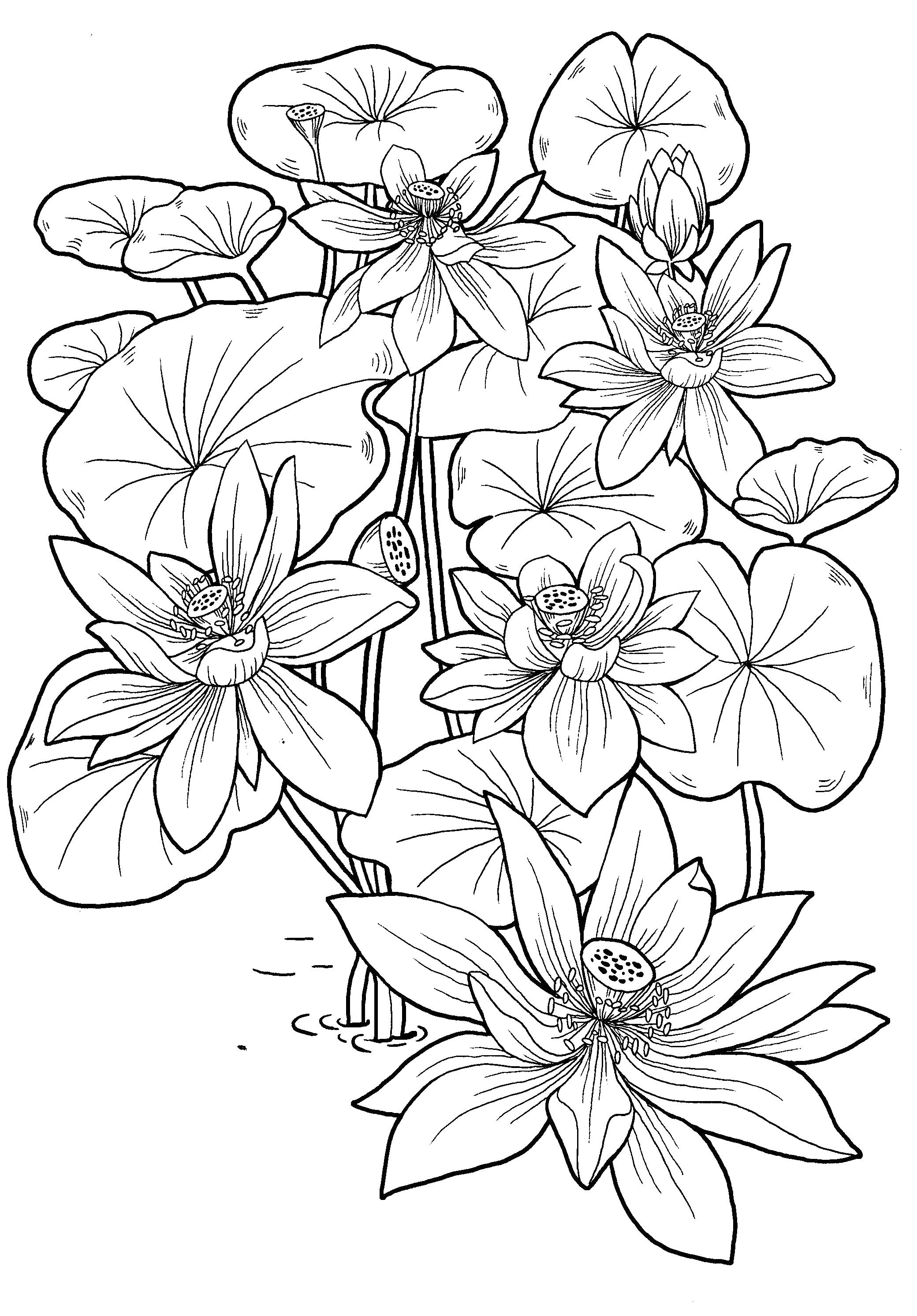 Coloring pages for 8 9 10year old girls to download and